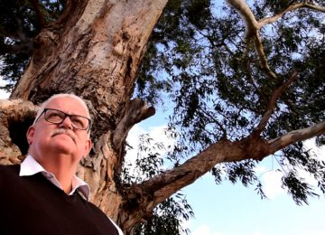 Smart planning could save 300-year-old redgum