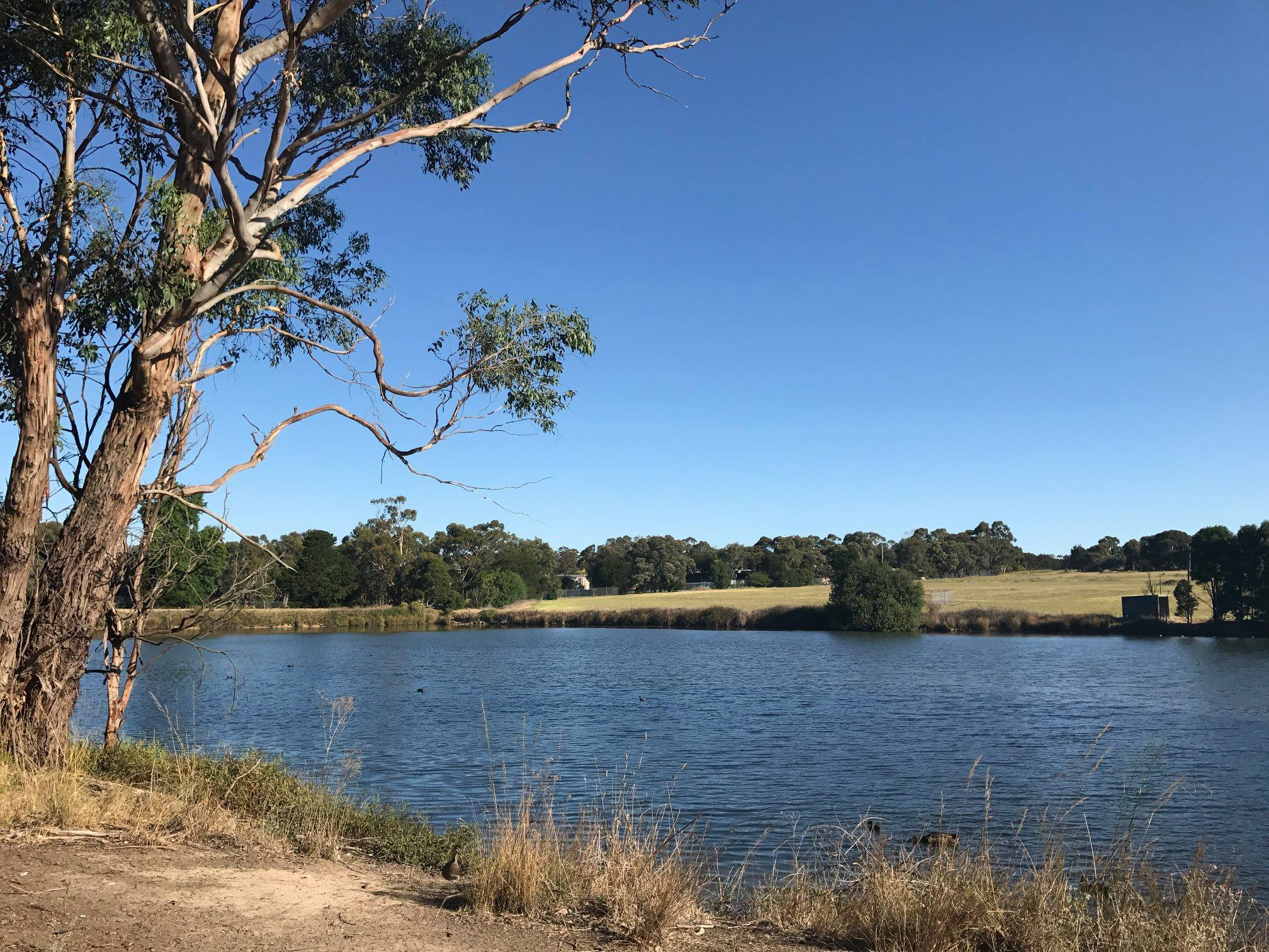 Development Victoria intends to fill in Lake Knox to create a new blank canvas on which to meet stormwater requirements for housing developments.