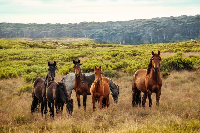 Brumby Motion – find a new home for wild horses