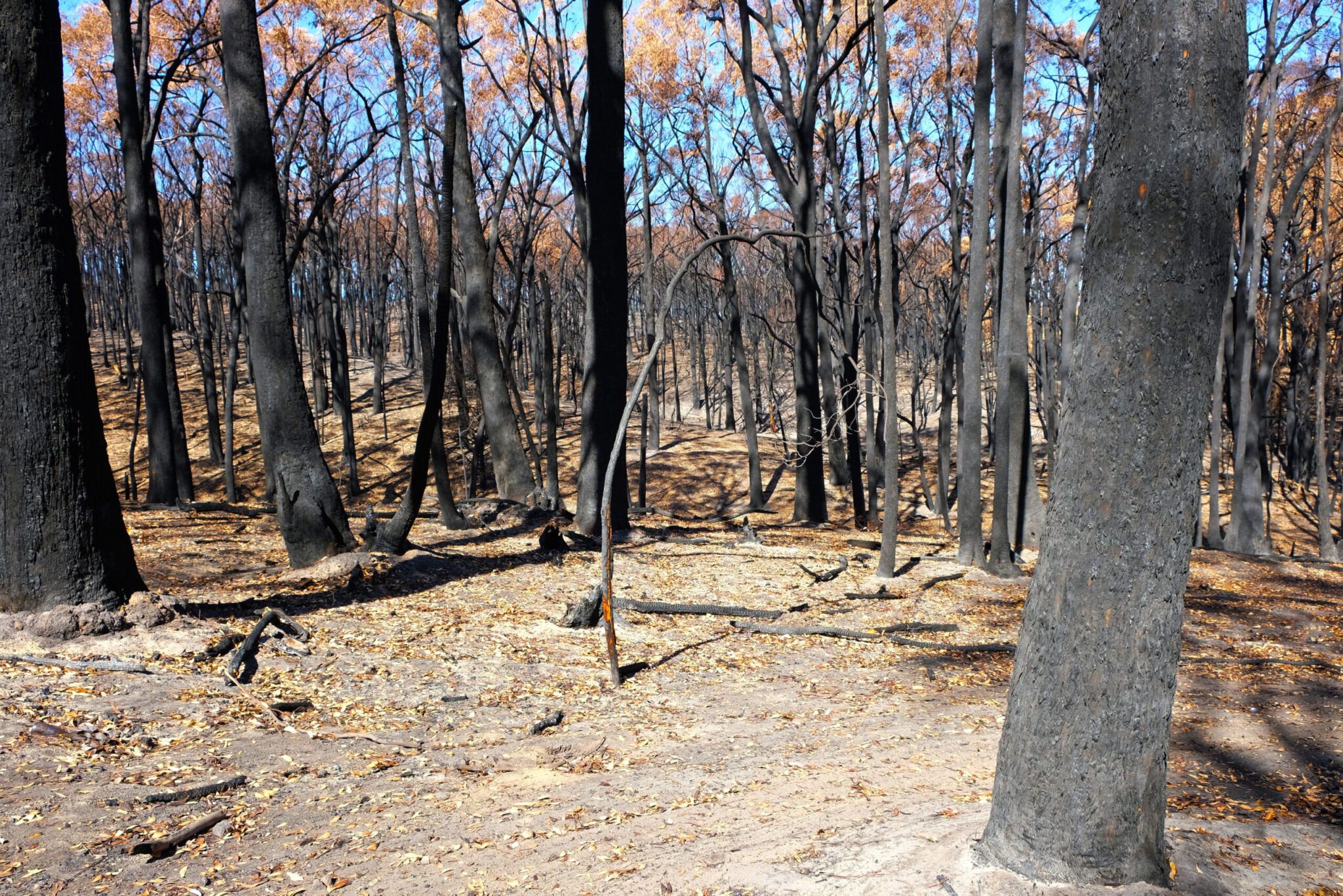 Motion – Devastation from 2019/20 Bushfires