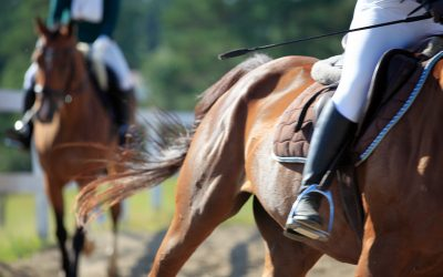 Use of Whips in Horse Racing